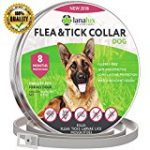 Tick ​​protection for dogs